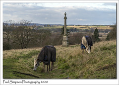 Photo of Horses and Monument