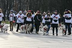 Wielka Orkiestra Świątecznej Pomocy WOŚP / The Great Orchestra of Christmas Charity Foundation (margycrane) Tags: wielkaorkiestraświątecznejpomocy wośp warszawa warsaw placmarszjózefapiłsudskiego piłsudskisquare dogs volunteers thegreatorchestraofchristmascharity