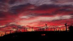 Lyon - Incroyable coucher de soleil sur la gare de Vaise. (Gilles Daligand) Tags: lyon vaise coucherdesoleil sunset gare