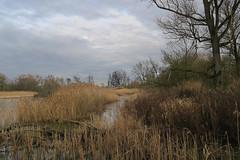 Hoboken Creek - Belgium (roland_tempels) Tags: belgium naturereserve hobokensepolder antwerp nature water landscape clouds