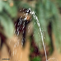 Les petites coses.....Las pequeñas cosas. (11) (AviAntonio) Tags: brollador aigua colors bokeh surtidor agua colores calma