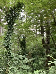 Деревья в лесу. Trees in the forest. (svv.david) Tags: деревья в лесу trees forest горы зеленый листья лето жара тепло утро россия mountains green leaves summer heat morning russia