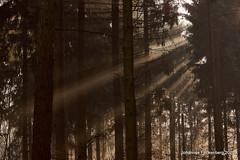 strahlender Morgen (grafenhans) Tags: sony alpha 68 a68 alpha68 slt tamron 4056 70300 wald sonnenstrahlen nebel natur landschaft licht light grafenwald bottrop nrw