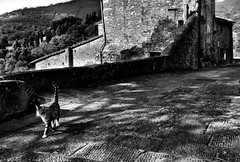 ........ (robertoburchi1949) Tags: cats gatti animali animals blackwhite bianconero city street