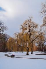 Julia Davis Park, Boise (Explored 1/13/2020) (fandarwin) Tags: julia davis park boise winter snow bench self darwin fan fandarwin olympus omd em10