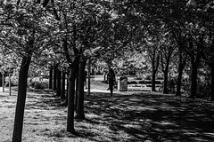 Shady pathway (David Redfearn) Tags: blackandwhite blackandwhitephotography monochrome parkland pathway footpath shade lightandshade allnationspark northcote canon6d canoneos6d canonef24105mm