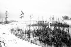 le brouillard d'hier (David G. Ouellette) Tags: verdun sudouest montréal elmarit28mmf28