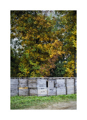Autumn (DJ Wolfman) Tags: autumn trees color leaves yellow green crates fall
