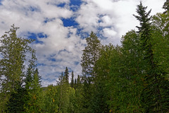 A Setting of Blue Skies with Clouds as a Backdrop to a Nearby Forest in the Chena River State Recreation Area