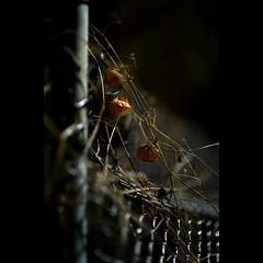 Night # 1 (alleys) Tags: 8512 85mm night planar