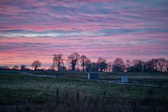 Pink Sunset (Bephep2010) Tags: 2019 7markiii aachen alpha bäume deutschland germany himmel ilce7m3 kornelimünster lenstagger minolta minoltamdtelerokkor135mm128 nrw nordrheinwestfalen northrhinewestphalia sonnenuntergang sony wiesen winter wolken clouds meadows pink rosa sky sunset trees ⍺7iii