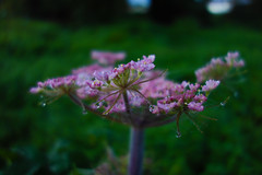 autumn dew - Cullompton, Devon - Oct 2019 (Dis da fi we) Tags: autumn dew cullompton devon lord byron