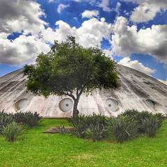 Peek a boo... (Tayon) Tags: ibirapuera parque saopaulo celllphone pocophone
