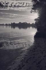 Morning (Stueyman) Tags: sony alpha a7 a7ii wa westernaustralia au australia zeiss batis batis240cf 40mm outside availablelight river water trees sun morning perth bw blackandwhite noiretblanc