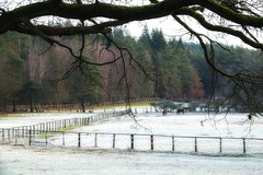 A little bit of winter atmosphere (Zoom58.9) Tags: trees horses snow nature fence landscape branch schnee ast sony natur landschaft pferde bäume zäune sonydscrx10m4 europe europa germany deutschland niedersachsen lüneburg