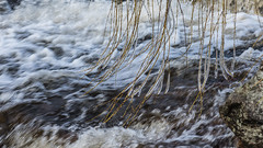 Flowing water and a little ice (tonyguest) Tags: water flowing movement river mörrum mörrumsån ice karlshamn blrkinge sweden tonyguest frozen longexposure