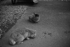 cats (Typ250) Tags: 東京都 日本 leicam leica monochrome mmonochrom leicammonochrom summicron summicron50mmf2 summicron1250 summicron50mmf22nd summicron50mm