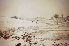 Pasture Land in Winter (Dave Linscheid) Tags: snow rural farm country fence agriculture watonwancounty picmonkey minnesota texture textured