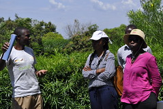 Raphael Odwaro, lead farmer from Homa Bay county, Kenya, speaking to project staff during field visit  with Susan C. and Susan O.