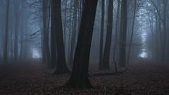 Two ways (Pascal Riemann) Tags: weg wald deutschland haard landschaft natur nebel germany landscape nature outdoor forest path