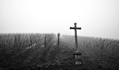 Vines and Cross to the nebulae  2020 (matthias416) Tags: schönberg breisgau blackforest schwarzwald reben vines cross kreuz nebel dunst fog nebulae haze nikon deutschland germany bw monochrome monochrom blackandwhite schwarzweiss