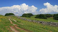 Randonner en Aubrac... (Yvan LEMEUR) Tags: aubrac randonnée chemin chemindesaintjacques nuages cumulonimbus muret muretdepierressèches extérieur aveyron pastoralisme elevage france landscape paysage solitude