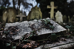 Life and Death (Paulie-W) Tags: graveyard cemetary highgate ivy