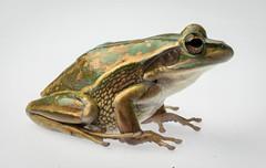 Animals and macro (wilchem16) Tags: reptiles animals macro flash