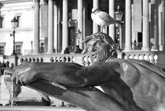 """""""Don't even think about it!"""".... (markwilkins64) Tags: seagull statue water fountain droplets waterdroplets drips trafalgarsquare london uk thenationalgallery streetphotography streetlights street mono monochrome blackandwhite bw stare birdpoo columns people bokeh depthoffield dof masculine muscles strong humour humor humorous funny markwilkins streetlamps"""
