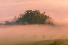 _MG_6289.0212.Tân Lập.Mộc Châu.Sơn La (hoanglongphoto) Tags: asia asian vietnam northvietnam northernvietnam northwestvietnam landscape scenery vietnamlandscape vietnamscenery mocchaulandscape nature naturelandscape sunrise clouds mountain flanksmountain vietnammountainouslandscape cloudsofmocchau canon canoneos5dmarkii canonef100400mmf4556lisusm tâybắc sơnla mộcchâu tânlập thiênnhiên thiênnhiênmộcchâu natureinmocchau bìnhminh mây mâymộcchâu núi sườnnúi phongcảnhvùngnúi topmountain dãynúi đỉnhnúi mâyluồnmộcchâu forest theforest rừng hoanglongphoto bìnhminhmộcchâu
