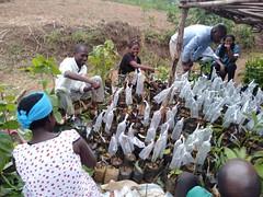 Elated farmers from Bugesera, Rwanda, upon receiving avocado scion seedlings