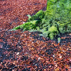 IMG_2406.JPG (esintu) Tags: tree leaves fall green brown abstract nature gent ghent belgium