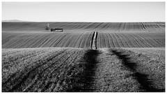 Las olas (una cierta mirada) Tags: landscape nature agriculture bnw blackandwhite lumix tree path