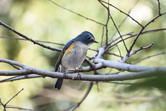 what kind of bird is this (SolitaryFiatist7221) Tags: nikon d7200 nikkor afp dx 70300mm bird