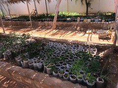 Tree nursery at Ministry of Environment, Agriculture and Climate Change offices in Garowe, Puntland.