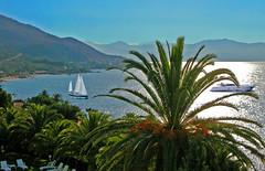 CORSICA near Ajaccio (Jacques Rollet (little available)) Tags: corsica boat sailboat voilier bateau palmier mer sea palm