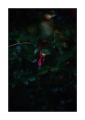 This work is 16/21 works taken on 2019/12/8 (shin ikegami) Tags: sony ilce7m2 a7ii sonycamera 50mm lomography lomoartlens newjupiter3 tokyo 単焦点 iso800 ndfilter light shadow 自然 nature naturephotography 玉ボケ bokeh depthoffield art artphotography japan earth asia portrait portraitphotography