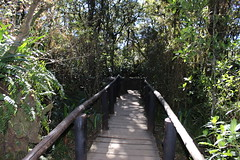 Forest Path (Rckr88) Tags: forest path forestpath paths pathway walk walkway mpumalanga southafrica south africa greenery green travel travelling trees tree garden nature naturalworld outdoors