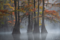 Hidden Figures (Willie Huang Photo) Tags: swamps bayou atchafalaya basin southeast water trees fall autumn baldcypress mist fog colors red orange forest landscape nature scenic