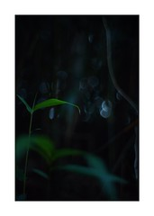 This work is 18/21 works taken on 2019/12/8 (shin ikegami) Tags: sony ilce7m2 a7ii sonycamera 50mm lomography lomoartlens newjupiter3 tokyo 単焦点 iso800 ndfilter light shadow 自然 nature naturephotography 玉ボケ bokeh depthoffield art artphotography japan earth asia portrait portraitphotography