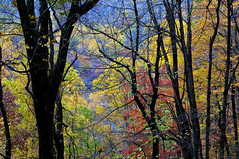 Fall, Great Smoky Mountains National Park (klauslang99) Tags: klauslang nature naturalworld northamerica fall autumn great smoky mountains national park trees colour color leaves