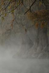 ...Y DICEN QUE PERDIÓ LA CABEZA EN UN SUEÑO... (NIKONIANO) Tags: camécuaro amanecer agua amanecerenellago amanecerenmichoacán sergioalfaroromero ahuehuete sabinos sabino surreal sergioalfaro sueños supershot riverofdreams