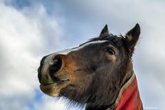 Horse portrait (akatsoulis) Tags: horse animals oxford oxfordshire portrait alexkatsoulis countryside nature horseriding horseportrait nikon clouds sky equinephotography equine photography