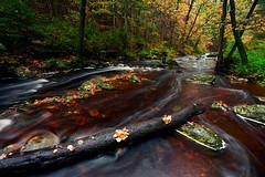Autumn (DB-Naturfotografie) Tags: natur nature fluss river bach wasser water herbst autumn season tree trees leaves blätter farbenfroh canon 5dsr landscape beautiful