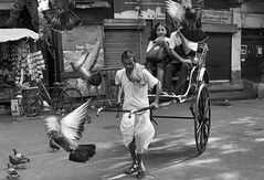 (sharmi_diya06) Tags: street streetphotography streetphot abstract morning birds blackandwhite man people light shadows natgeoyourshot natgeophotographers natgeophotographer yourshotnatgeo