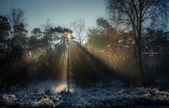 Lasergames XL (Ingeborg Ruyken) Tags: ochtend morning sunrise tree 500pxs sun natuurmonumenten boxtel natuurfotografie autumn fall kampina herfst