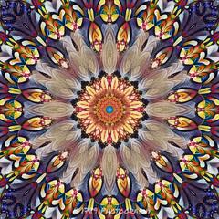January Fractal (Rollingstone1) Tags: january fractal kaleidoscope abstract design colour art artwork