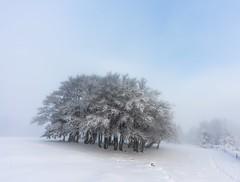 Island of trees (Yerly.J) Tags: tree trees nature outdoors scenics atmosphere fog foggy mist misty tranquility sunrise mood moody cloud switzerland light lighting landscape arbre baum