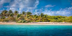 Guadeloupe - Petite Terre (François Leroy) Tags: françoisleroy france guadeloupe antilles petiteterre ile ciel mer océan eau palmier plage sable soleil