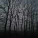 Mysterious dark forest with fog
